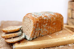 Loaf of bread. Dirt, germs, mess and worms Royalty Free Stock Photo