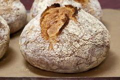 Loaf bread on baking sheet Stock Image