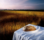 Loaf of bread still life on white decorated table. In the middle of cereal fields Stock Photos