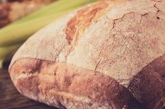 Loaf ciabatta bread Stock Photos