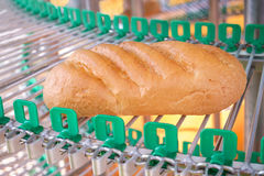 A loaf of fresh bread out of the oven on a conveyor belt on the background of the bakery. Agriculture Royalty Free Stock Image