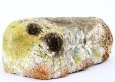 Loaf of mouldy brown bread. Macro close up, isolated on white Royalty Free Stock Photo