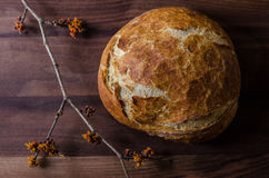 Loaf of Rustic Whole Wheat Bread with Witch Hazel Branch stock image