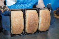 Loafs de pão frescos no formulário do pão do cozimento Foto de Stock Royalty Free