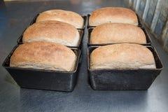 Loafs de pão frescos no formulário do pão do cozimento Imagem de Stock Royalty Free