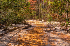 Loamy footpath and thicket at bottom of Providence Canyon, USA Stock Photography