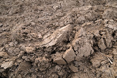 Loamy soil Stock Images
