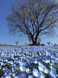 Loan petals. Unleafy tree under the blue royalty free stock image