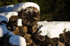 loan trä Arkivbilder