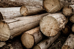 loan trä Wood förberedelse i skog Royaltyfria Foton