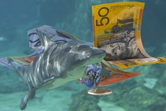 LoanShark. Beware of loan sharks Royalty Free Stock Images