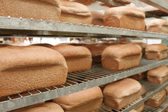 Loaves of bread in bakery. Rows of fresh bread on shelves in bakery royalty free stock photos