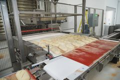 Loaves of unbaked sourdough bread on a conveyor royalty free stock images