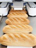 Loaves of bread on conveyor stock images