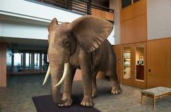 Lobby för elefantkontorsbyggnadaffär Royaltyfria Bilder