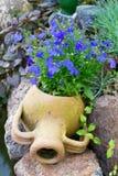 Lobelia azul em um frasco Fotografia de Stock Royalty Free