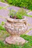 Lobelia flowers in stone vase Royalty Free Stock Image