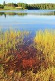 Lobelia lake surrounded by forest Royalty Free Stock Photo
