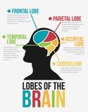 Lober av hjärnan Infographic vektordesign Royaltyfria Foton