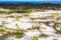 Loberia beach, San Cristobal island, Ecuador Stock Images