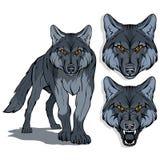 Lobo, aislado en el fondo, el ejemplo de color, convenientes blancos como el logotipo o mascota del equipo, depredador peligroso  ilustración del vector