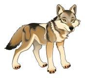 Lobo. Caráter isolado vetor Imagens de Stock Royalty Free