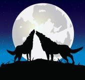 Lobo com um she-wolf ilustração royalty free