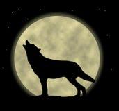 Lobo del grito Foto de archivo libre de regalías