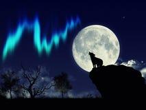 Lobo e Aurora Fotos de Stock