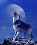 Lobo e lua do urro Imagens de Stock Royalty Free