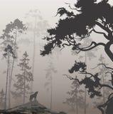 Lobo en el bosque stock de ilustración