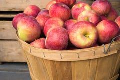Lobo jabłka w koszu Zdjęcia Royalty Free