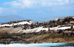 Lobo-marinho do cabo no console do selo Fotografia de Stock Royalty Free