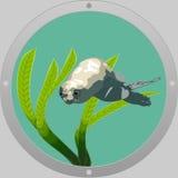 Lobo-marinho do mergulho ilustração do vetor