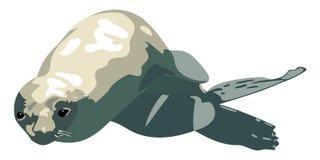 Lobo-marinho isolado na ilustração branca do vetor ilustração do vetor