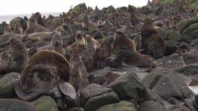 Lobo-marinhos de Notern filme
