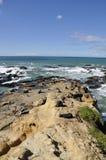 Lobo marino en rocas, Nueva Zelandia Foto de archivo libre de regalías