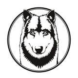 Lobo no círculo Imagem de Stock Royalty Free