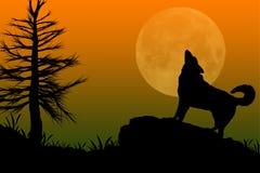 Lobo que grita en la luna Imagen de archivo libre de regalías