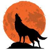 Lobo que grita en la luna en la medianoche Fotos de archivo libres de regalías