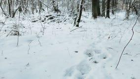 Lobo que persegue sua vítima na floresta nevado fria do inverno em Lituânia Primeiro ponto de vista da pessoa Movimento dramático filme