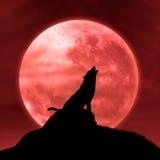 Lobo que urra na lua na meia-noite Fotografia de Stock Royalty Free