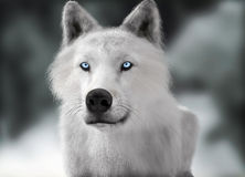 Lobo salvaje blanco con los ojos azules con la profundidad borrosa del fondo del invierno del campo Imagen de archivo libre de regalías