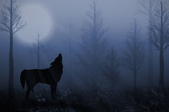 Lobo solitario imagen de archivo libre de regalías