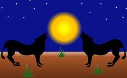 Lobos de gemido Imagen de archivo