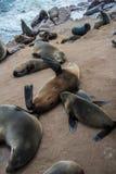 Lobos de mar que descansan en la cruz del cabo - Namibia Foto de archivo libre de regalías