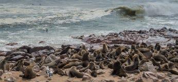 Lobos de mar que descansan en la cruz del cabo - Namibia Imagenes de archivo