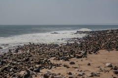 Lobos de mar que descansan en la cruz del cabo - Namibia Fotos de archivo
