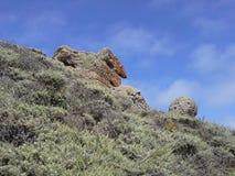 Lobos del punto, California Fotografia Stock