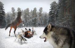 Lobos e cavalos Imagens de Stock